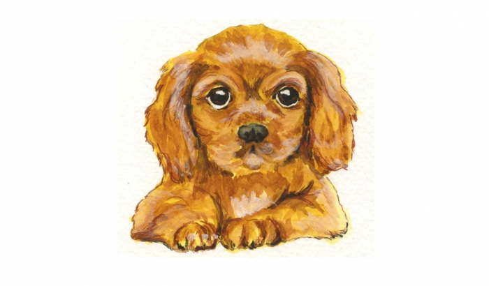 Book Illustration Puppy
